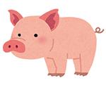 ザ・プラセンタクイーンの口コミと効果【豚プラセンタの特長】
